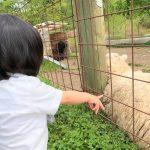羊さん、牛さんがお出迎え♡上ノ原牧場カドーレで動物たちとふれあい牧場体験