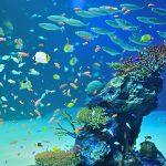 楽しく 涼しく家族でおでかけ!夏の「マリホ水族館」で海の魅力を体感