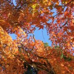 色とりどりの紅葉に囲まれて…♡子どもと一緒に秋の宮島をたっぷり満喫♪