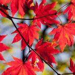 キレイな景色に癒されたい!広島の絶景紅葉スポット6選!