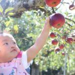 「マリモハウス」の2×4パネル工場見学&リンゴ狩り、開催レポート!