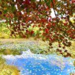 【広島南部エリア別】秋のお出かけでおすすめの紅葉スポット15選