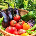 旬の野菜は定期購入で美味&便利に!安心安全のおすすめサービス9選