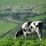広島から車で行ける観光牧場5選!可愛い動物たちと自然を満喫しよう♪