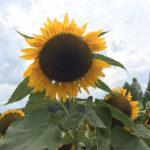 広島の世羅高原で花を楽しもう♡写真映えスポットや魅力を紹介