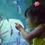 広島近隣の魅力的な水族館9選!かわいい魚たちに癒されて