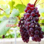 【2020最新】秋に行きたい!広島から車で行ける果物狩りスポット8選