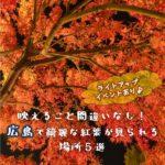 映えること間違いなし!広島で綺麗な紅葉が見られる場所5選!ライトアップイベントもあり♪