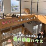 猫好きさんに見てほしい♡家中こだわり満載の快適素敵すぎる猫の楽園ハウス