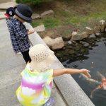 「名勝 縮景園」で鯉のエサやりを楽しもう!子どもと一緒にインスタ映えスポットの散策も♪