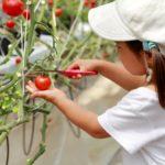 自ら体験し「自然」を学ぶ!環境学習のある幼稚園6選【広島市西区】