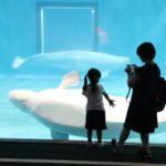 この夏、子連れで「しまね海洋館アクアス」へ!お出かけ完全ガイド♪