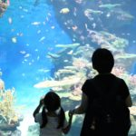 広島から日帰りでのお出かけにおすすめ!『しまね海洋館アクアス』で子連れ水族館を満喫♪