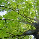 広島市森林公園の魅力を大公開!家族で思いっきり楽しもう
