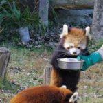 広島市安佐動物公園は家族で楽しめる魅力いっぱいのスポット!