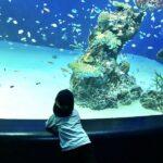 広島のおすすめ人気水族館10選 島根や山口など近隣の水族館も