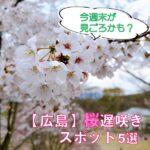 今週末が見ごろかも♡まだまだ花見に間に合う広島桜遅咲きスポット情報