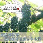 フレッシュな美味しさを満喫♡広島の夏の果物狩りスポット4選